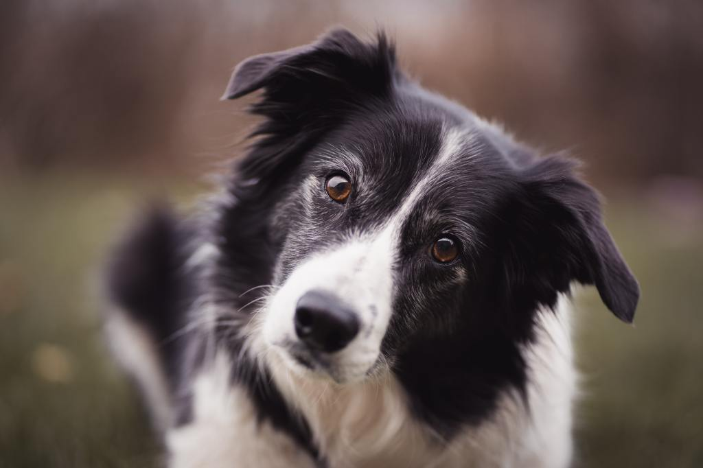 Top 10 Most Loyal Dog Breeds for Your Home