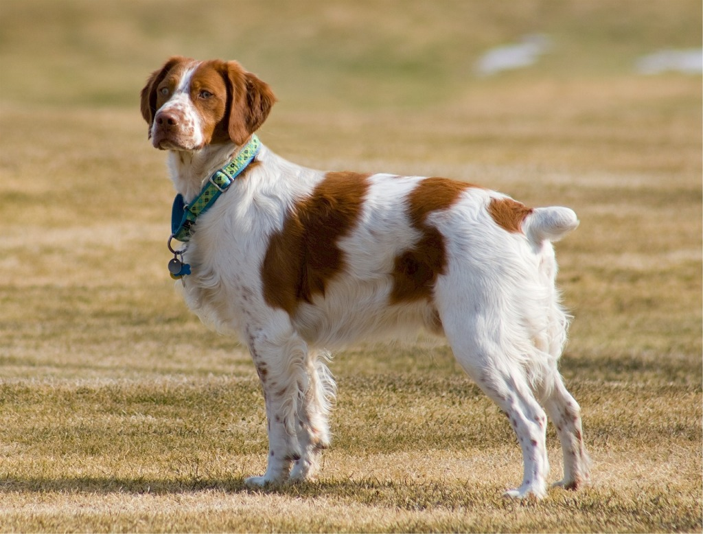 Top 10 Best Dogs for Beginners and First Time Dog Owners