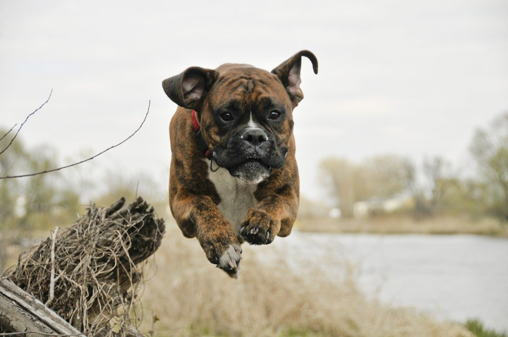 Top 10 Most Energetic Dog Breeds for Active People