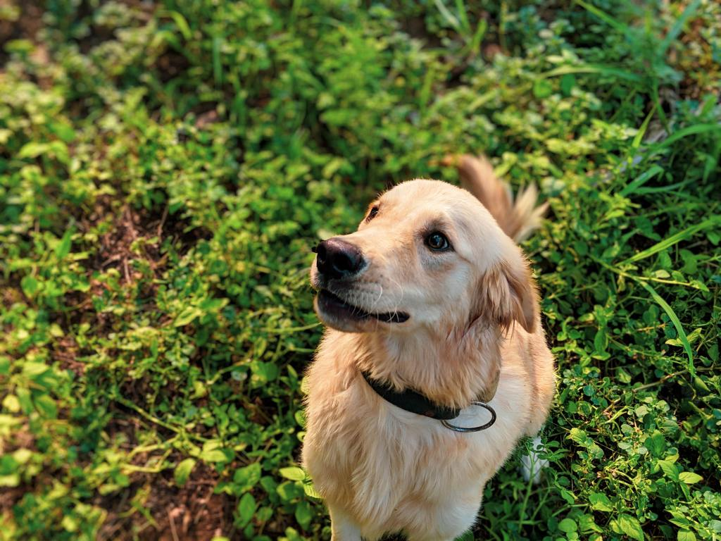 Top 10 Working Dog Breeds to Help With Those Tasks