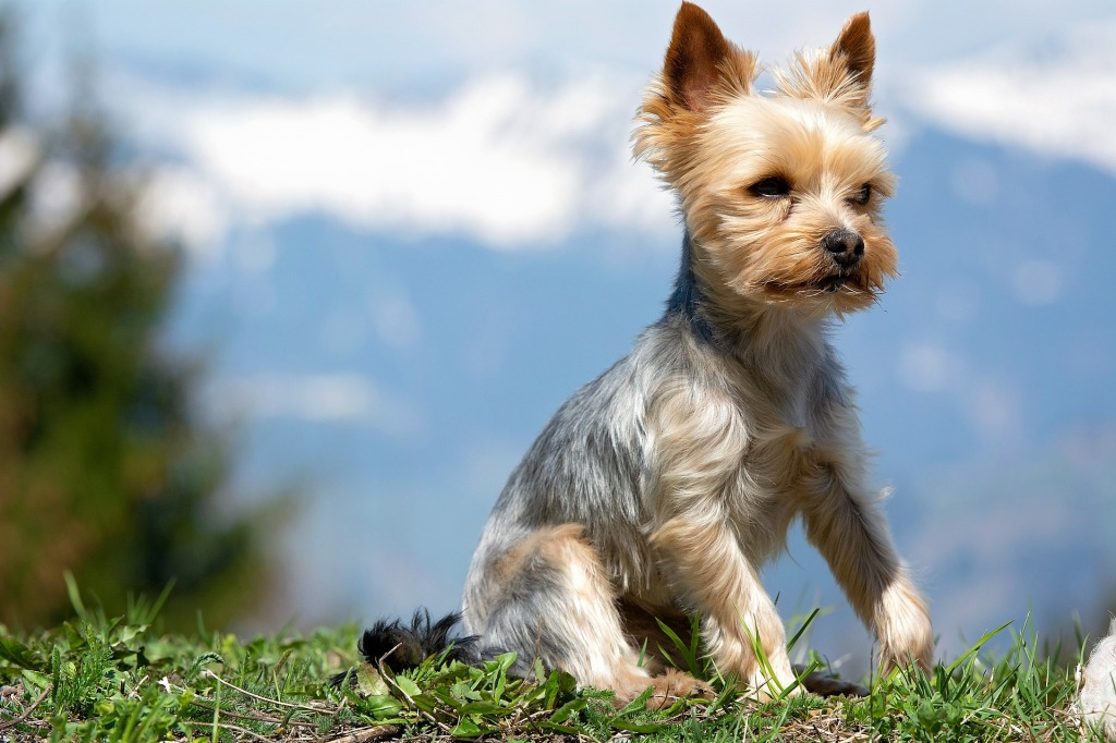 Top 10 Best Dog Breeds for Apartments and Smaller Living Spaces