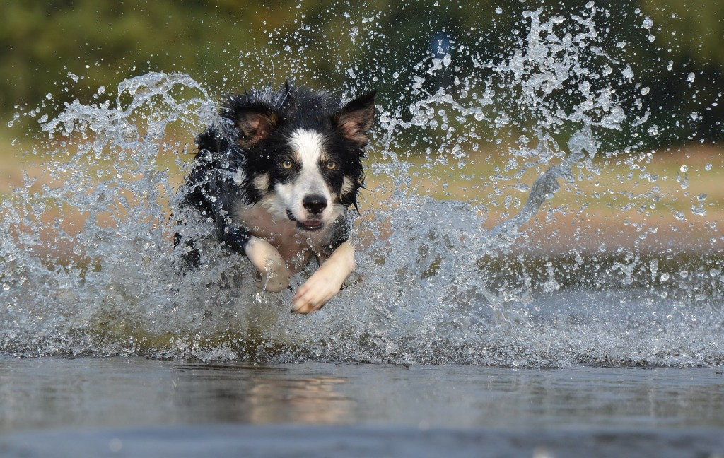 Top 10 Dog Breeds for Kids and Families