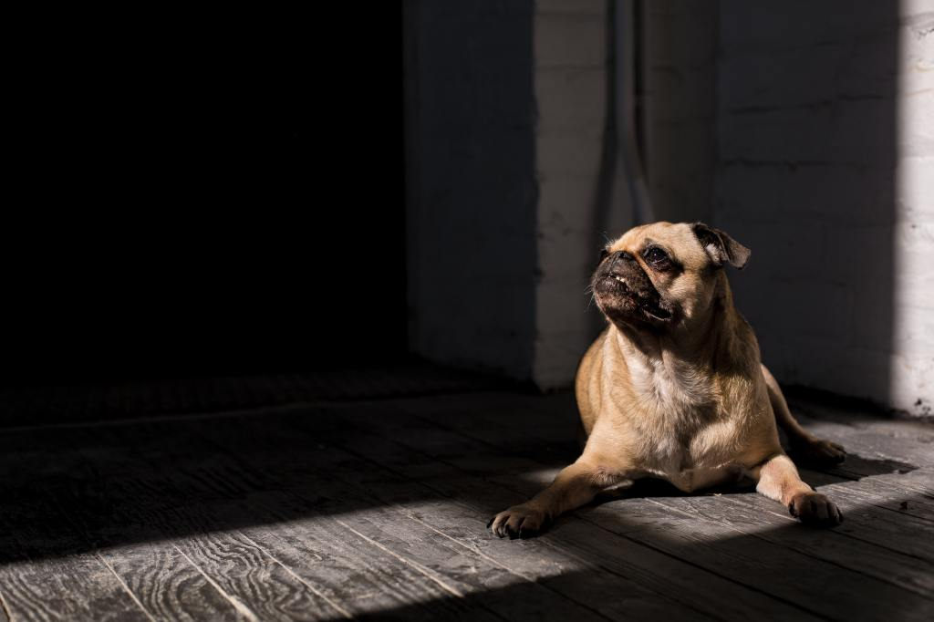 Is My Dog Depressed? - What To Do If Your Dog Seems Sad and Tired