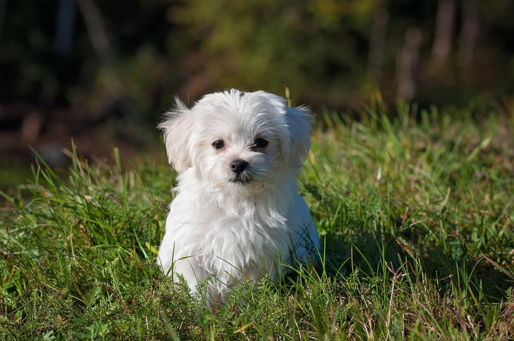Top 10 Best Dog Breeds for Seniors and Older People