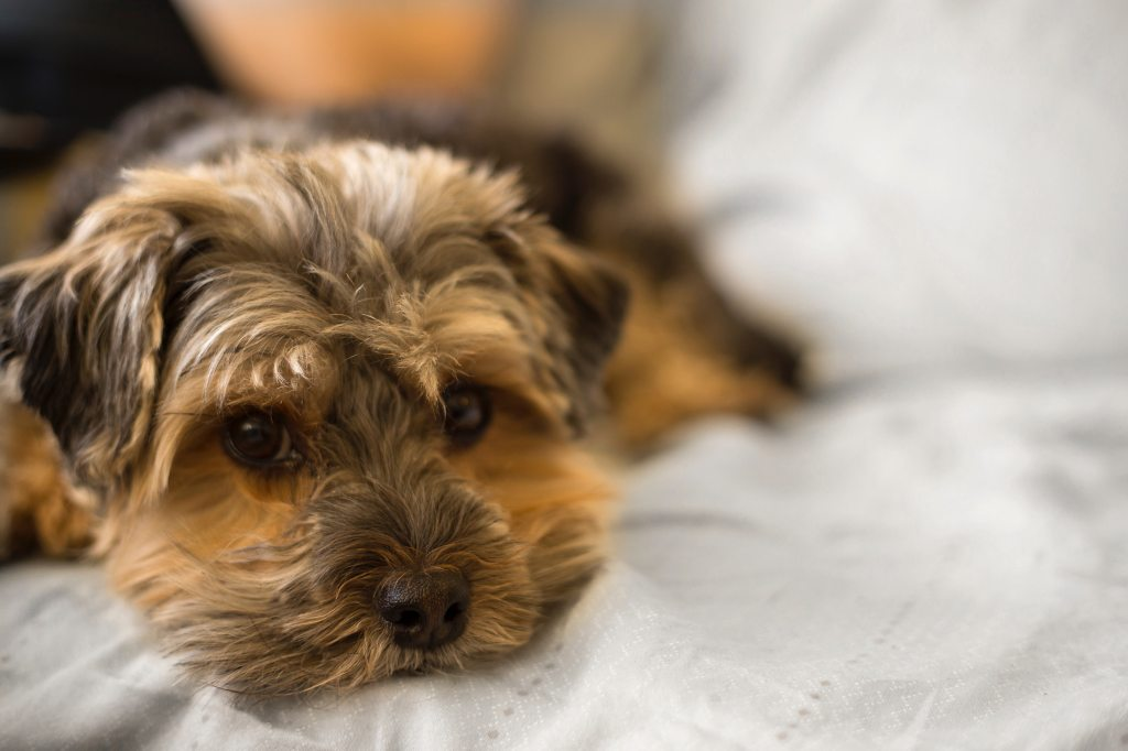 Top 10 Favorite Small Dog Breeds to Keep You Company