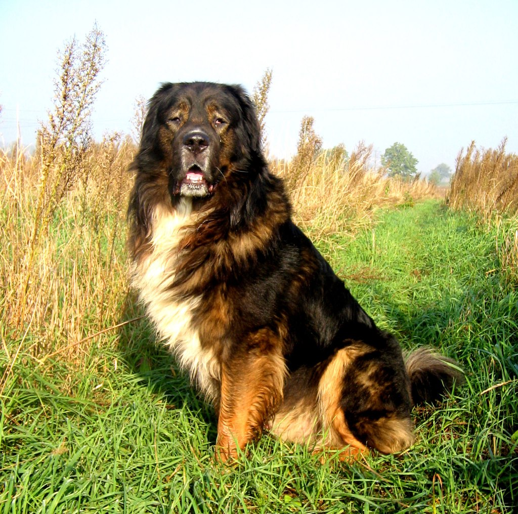 Top 10 Best Dog Breeds for Protection and To Keep You Safe