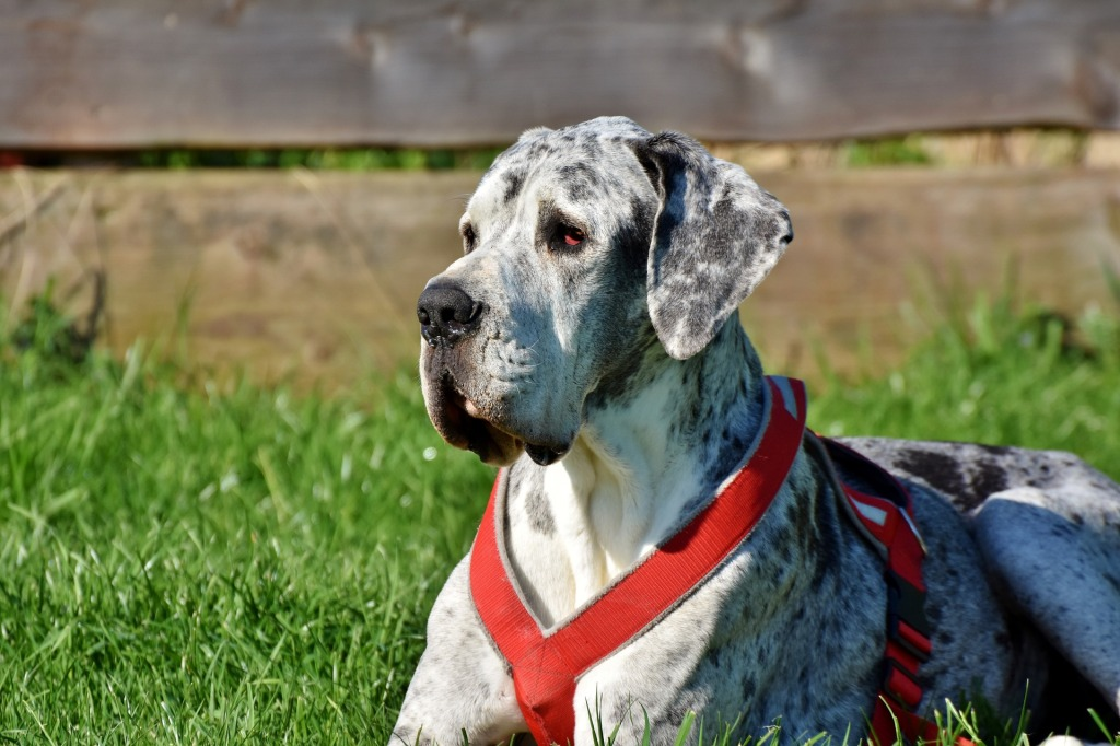 Top 10 Favorite Large Dog Breeds for Any Adventure