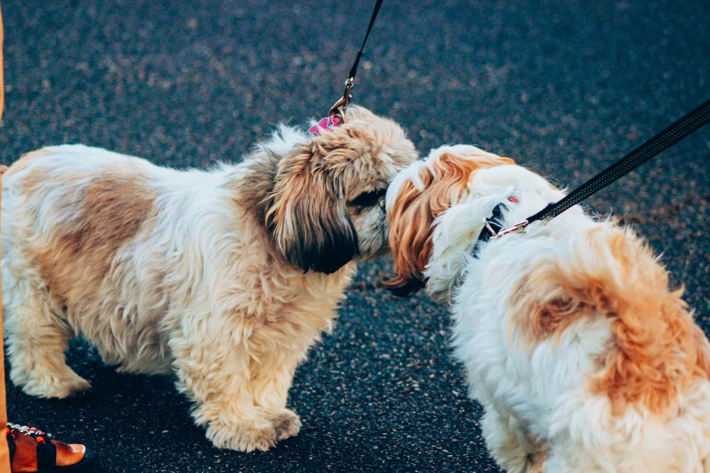 Helpful Tips to Follow When Introducing Dogs