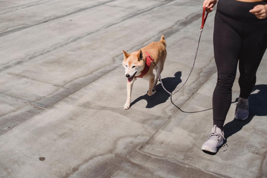 How To Build a Dog's Confidence In A Shy or Fearful Dog