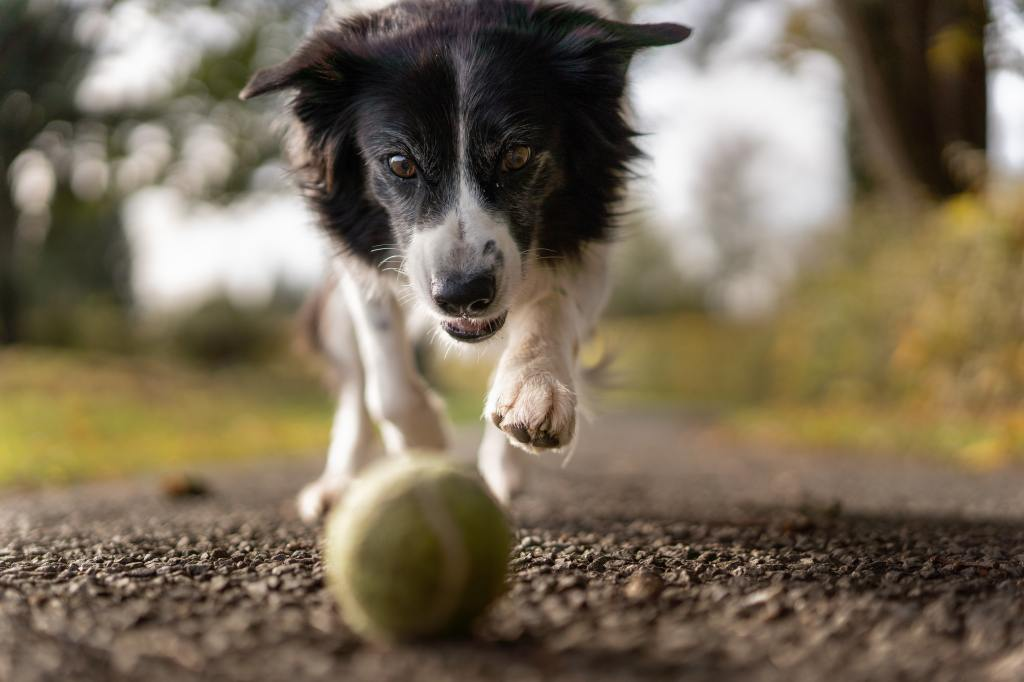 How to Train Your Dog to Play So You Can Have Hours Of Fun