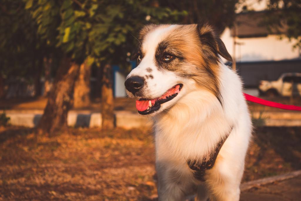 Dog Body Language Guide: How to Read Your Dog Like a Pro
