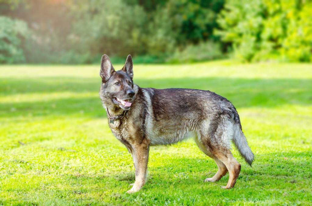 Top 10 Gassiest Dog Breeds