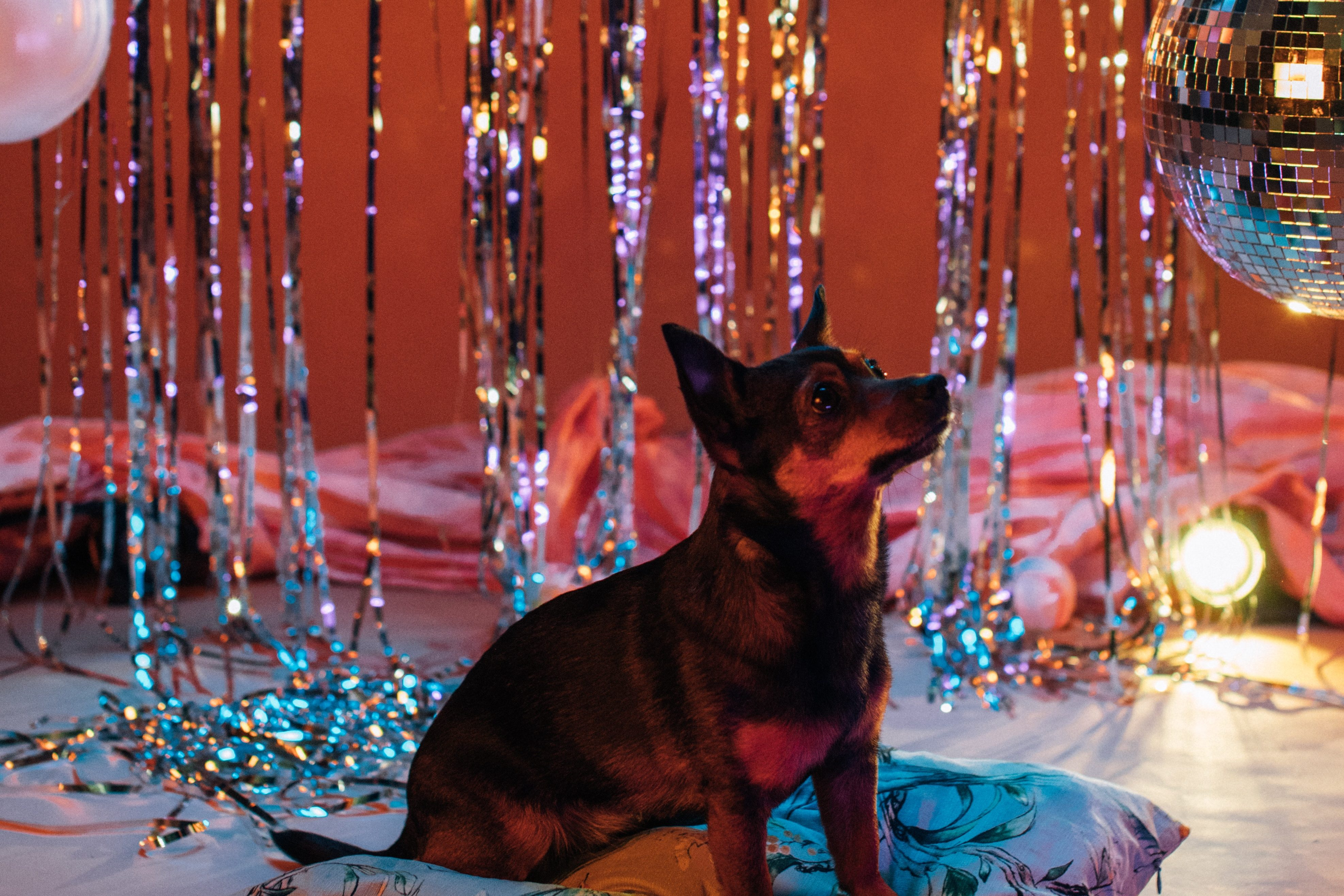 Top 10 Ideas for Your Dogs Birthday - Things to do for Your Dog's Special Day