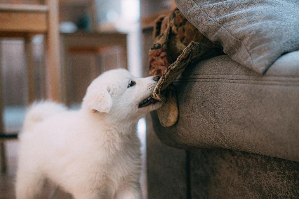 How to Puppy Proof Your Home For Your Newest Member